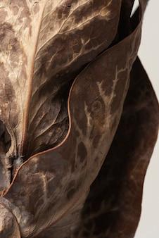 Feuilles de protéa séchées fond texturé