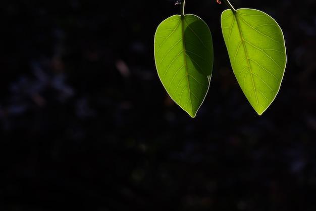 Feuilles reflétant la lumière naturelle du soleil pendant la journée sur un fond sombre