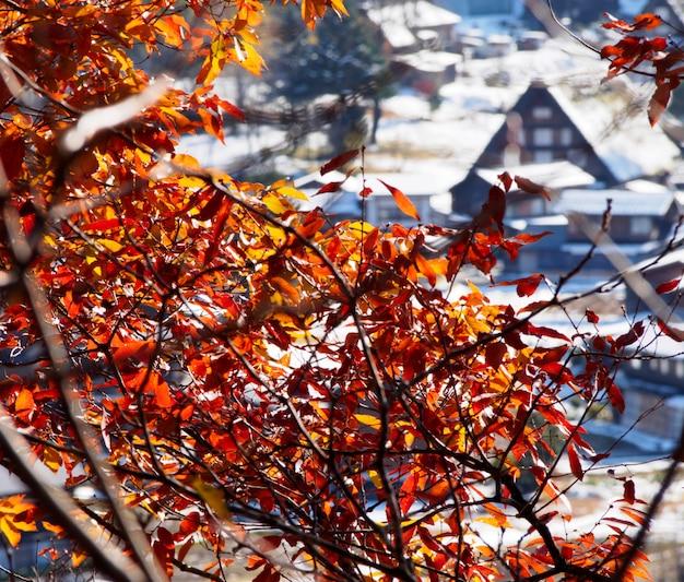 Feuilles rouges et neige en automne dans le village de shirakawa-go, japon