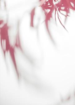 Feuilles rouges ombre sur fond blanc