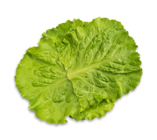 Feuilles de salade de laitue verte fraîche isolées