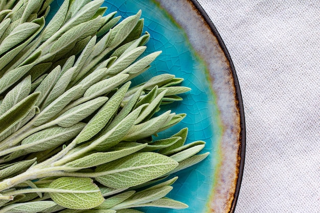 Feuilles de sauge verte sur une assiette en porcelaine bleue vue de dessus macro feuilles fraîches de couleur naturelle