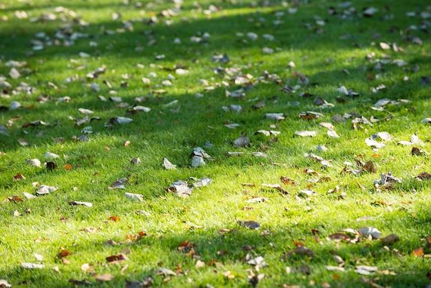 Feuilles séchées tombées dans l'herbe