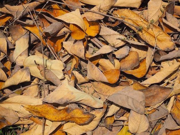 Feuilles sèches d'automne marron