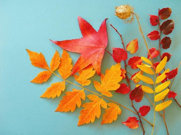 Feuilles sèches colorées sur fond bleu fond d'automne lumineux
