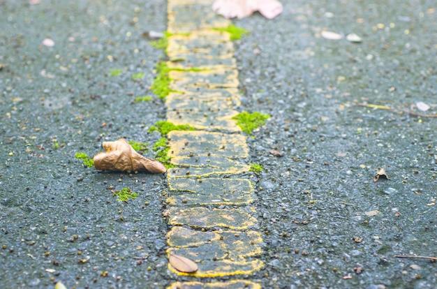 Feuilles sèches sur le sol, arrière-plans, motifs, flou