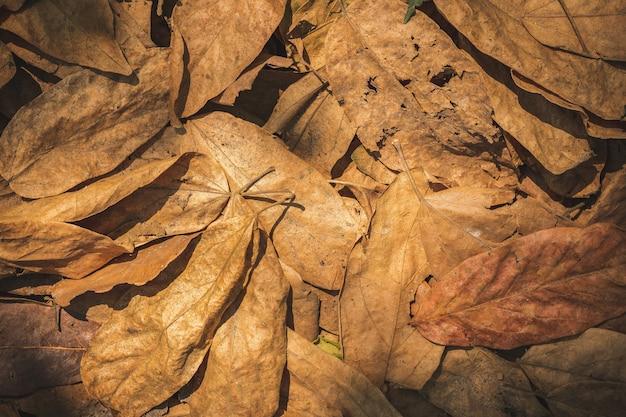 Feuilles sèches sur le sol dans la forêt. notion de sécheresse ou d'été.