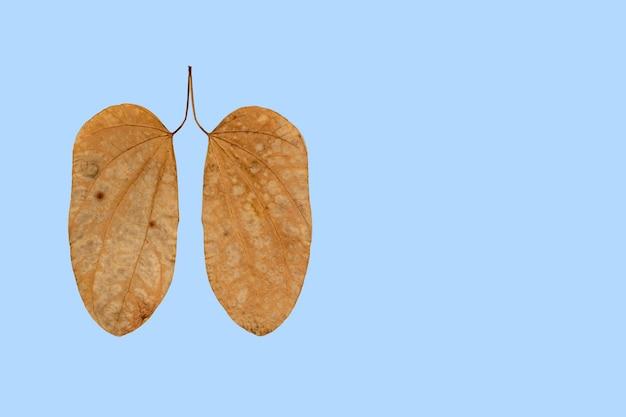 Feuilles sèches avec des taches en forme de poumon, cancer du poumon, journée mondiale de la tuberculose, journée mondiale sans tabac