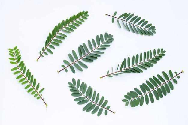 Feuilles de sesbania grandiflora.