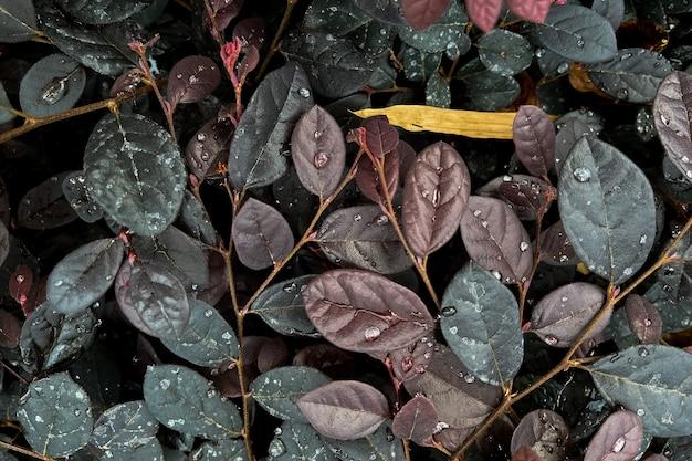 Les feuilles sont remplies de gouttelettes d'eau après la pluie. feuilles pour le fond