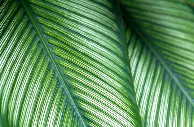 Les feuilles sont vertes dans un espace naturel naturel.