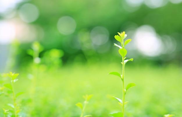 Feuilles supérieures fraîches jeune arbre vert sur fond flou dans le jardin d'été