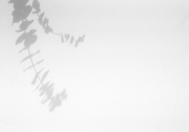 Feuilles de superposition d'ombre naturelle sur fond de texture blanche