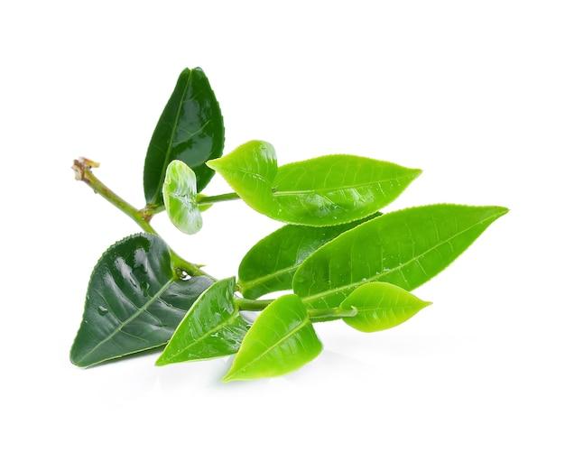 Feuilles de thé vert humides sur un fond blanc.