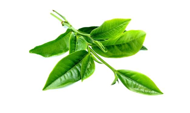 Feuilles de thé vert isolés sur blanc