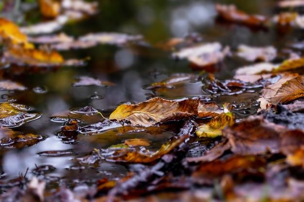 Feuilles tombées dans une flaque d'eau sombre, motif d'automne