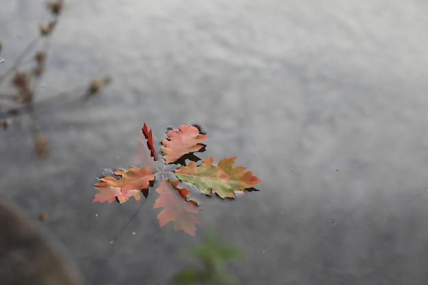 Les Feuilles Tombées Flottent Sur L'eau. Promenade D'automne Dans Le Parc Photo Premium
