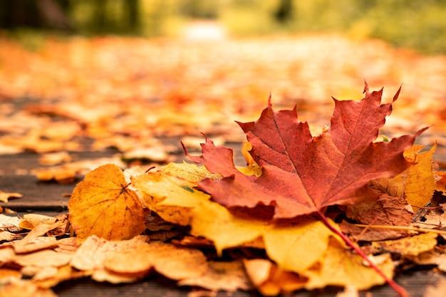 Feuilles tombées jaune vif, rouge et orange sur le chemin dans la forêt d'automne par temps ensoleillé