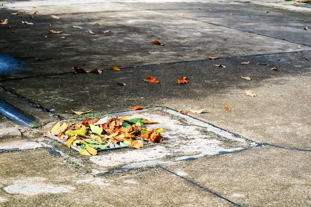 Les feuilles tombent après de fortes pluies. la zone de drainage du drain provoque des inondations.
