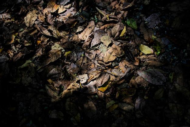 Les feuilles tombent dans le vert et les feuilles se flétrissent à l'automne.