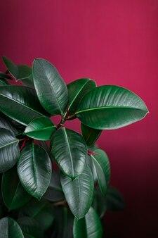 Feuilles tropicales comme jardin botanique de fond naturel et environnemental et toile de fond florale gr...