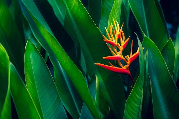 Feuilles tropicales fleur colorée sur fond de nature feuillage tropical foncé nature feuillage vert foncé