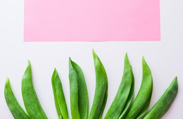 Feuilles tropicales sur fond rose pastel. concept minimal. mise à plat.
