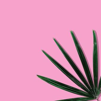 Feuilles tropicales sur fond rose pastel.