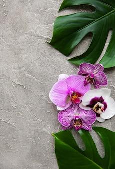 Feuilles tropicales monstera et fleurs d'orchidées