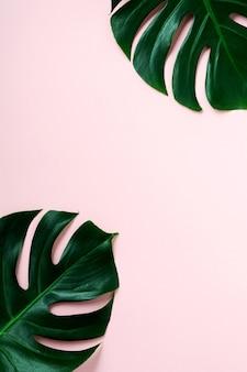 Feuilles tropicales monstera sur fond rose. feuille de plante monstera verte sur fond rose avec espace de copie. vue de dessus.