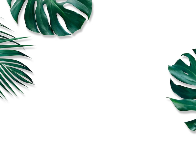 Feuilles tropicales de monstera et palmier jaune sur blanc