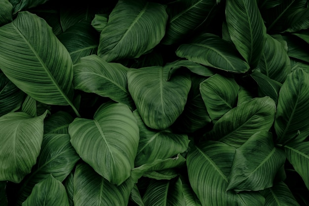 Feuilles tropicales résumé feuilles vertes texture nature fond