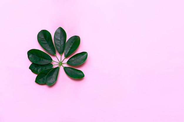 Feuilles tropicales sur rose pastel. concept minimal. pose à plat