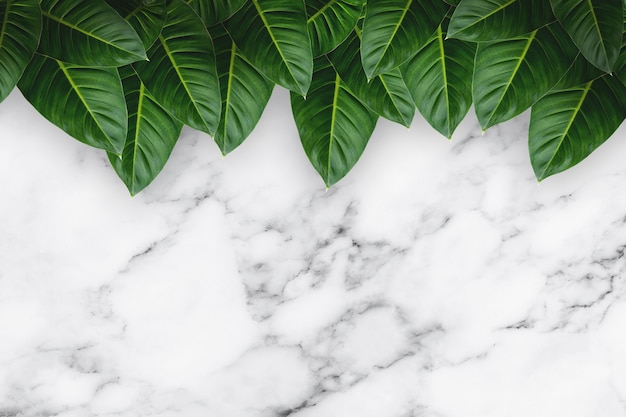 Feuilles tropicales vertes sur fond de marbre blanc.