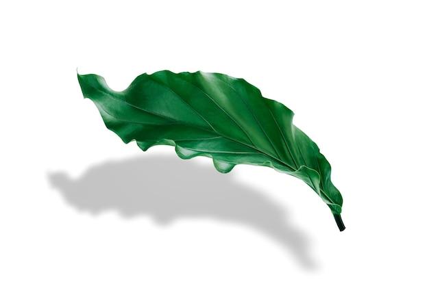 Les feuilles tropicales vertes lumineuses s'étendent sur un fond blanc avec des ombres noires