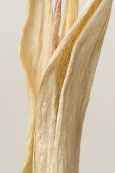 Feuilles de tulipes séchées sur fond gris