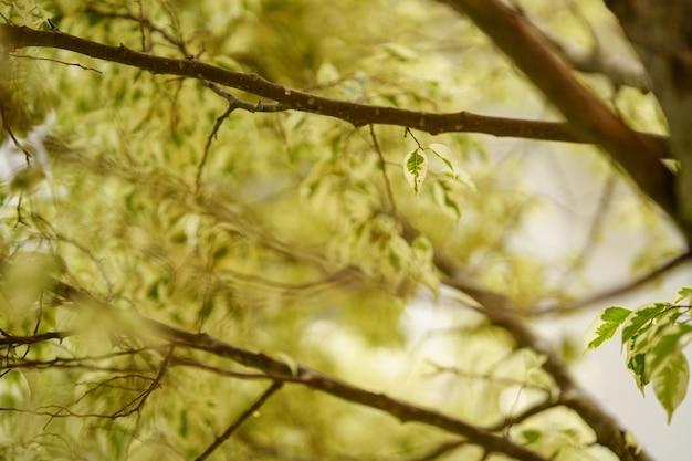 Feuilles vert clair sur la branche. mise au point sélective.