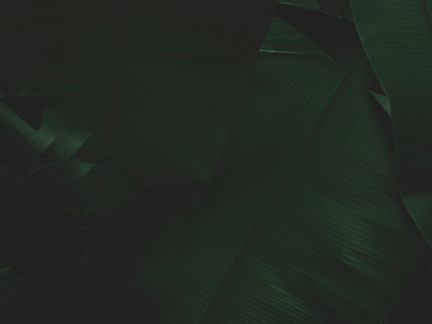 Feuilles vert foncé dans le fond de la nature de la forêt tropicale