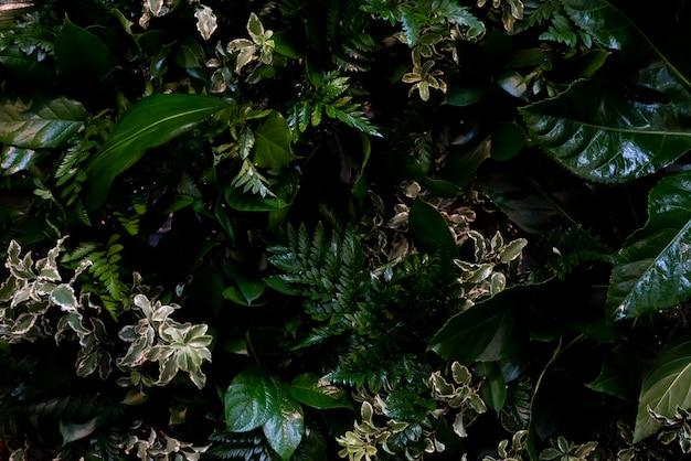 Feuilles vert foncé des herbes forestières.