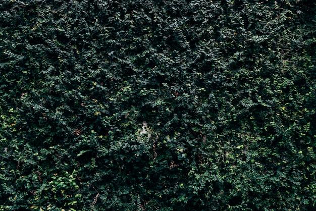 Feuilles vert foncé texturées