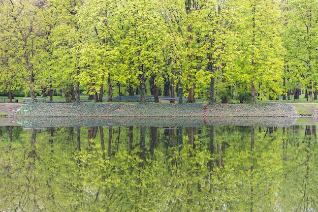 Feuilles vertes et arbres au parc