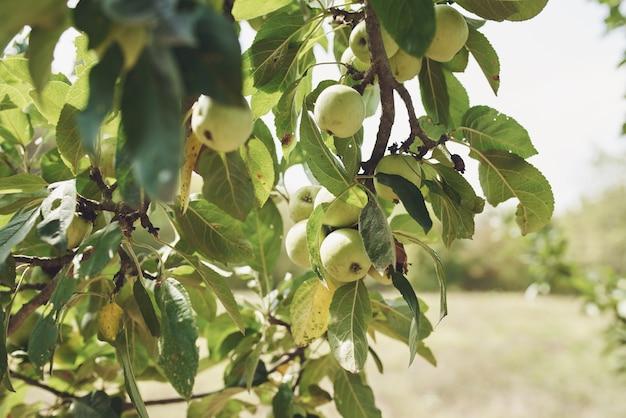 Les feuilles vertes des arbres naturels sont de l'air frais