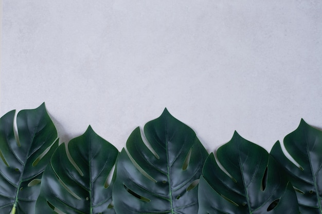 Feuilles vertes artificielles sur blanc.