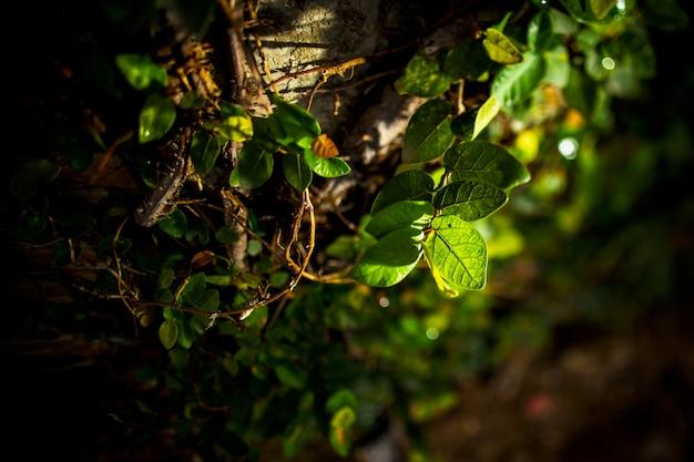 Feuilles vertes au soleil du soir