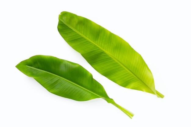 Feuilles vertes de banane sur fond blanc.