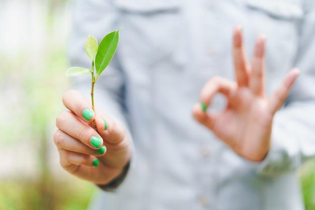 Feuilles vertes bâton tenant par la femme avec le clou vert poli et flou signe de la main ok