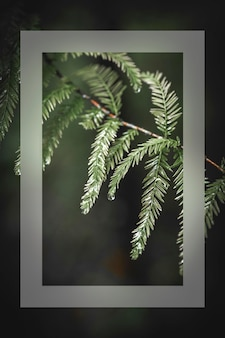 Feuilles vertes sur une carte de branche