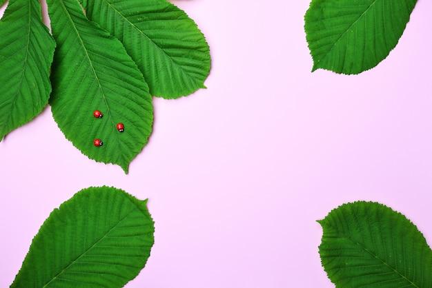 Feuilles vertes de châtaigne sur rose