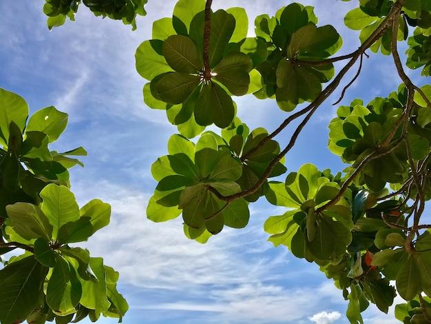Feuilles vertes contre le ciel au printemps