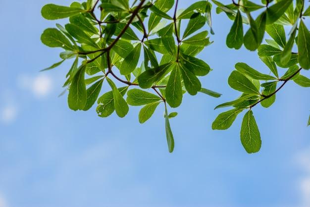 Feuilles vertes contre le ciel